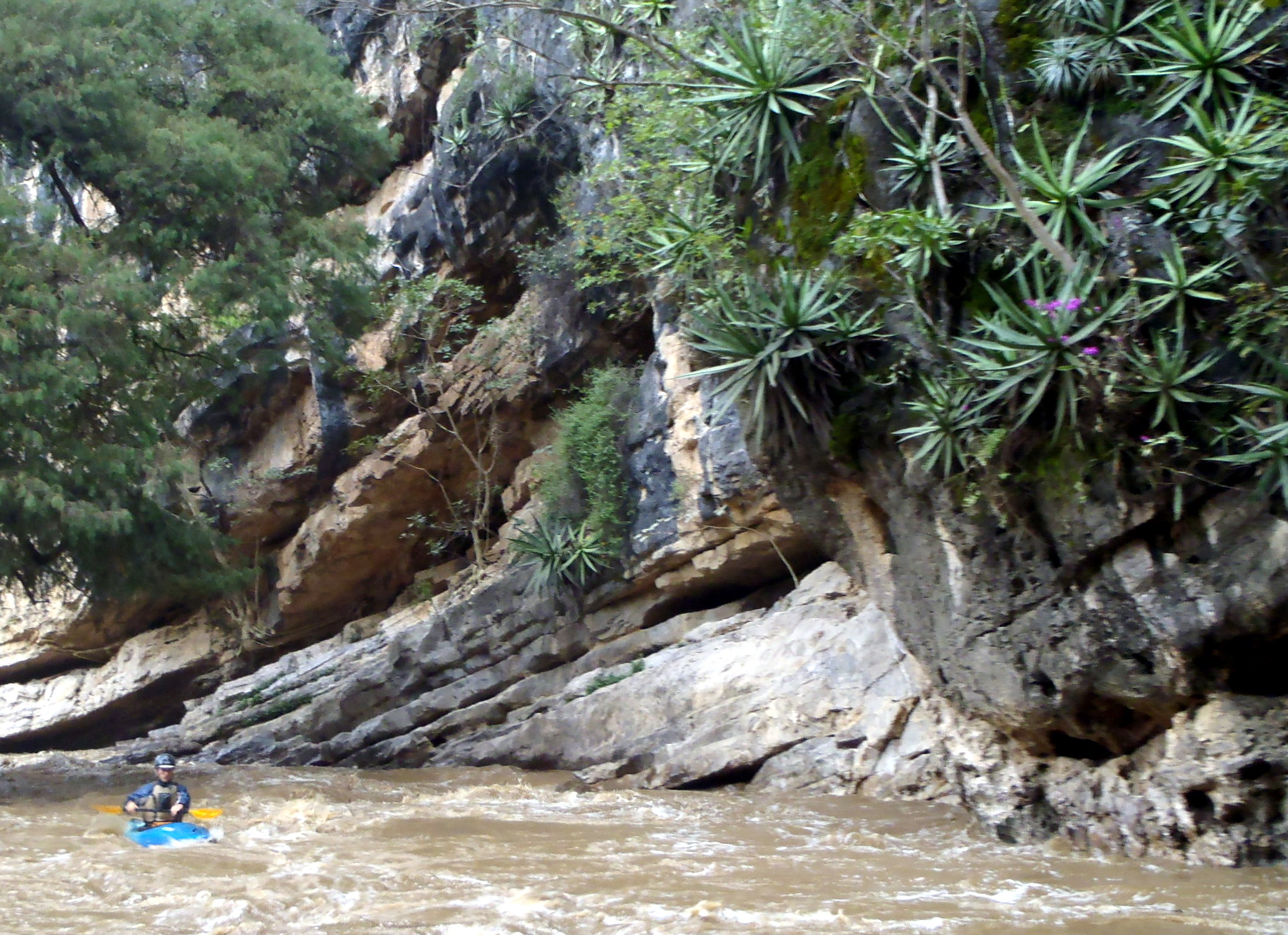 Exotic cactus thrive on the cliff walls along Canon Zabache on the Atoyac River. ©Lacey Anderson