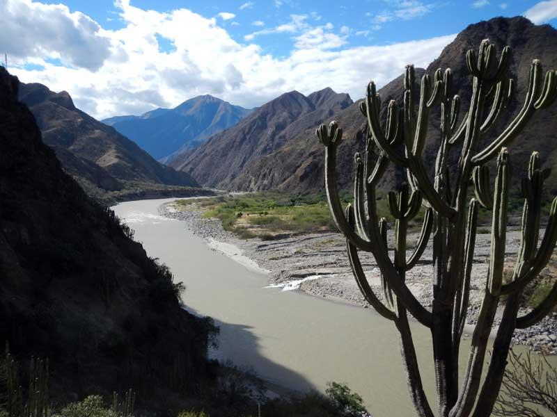Rio Maranon Cacti