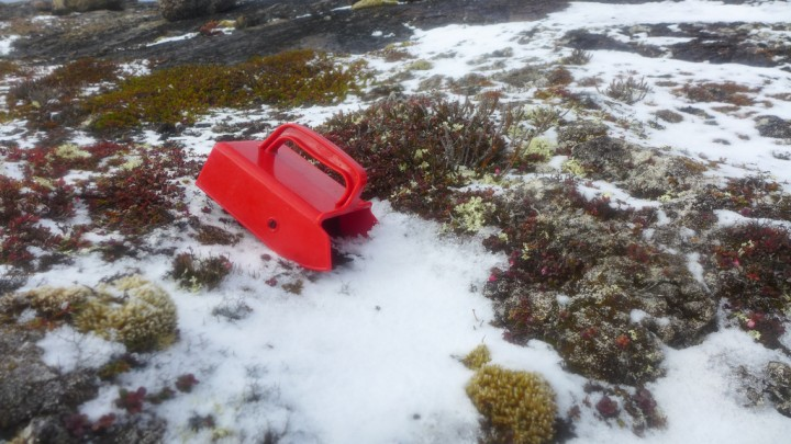 Photo by Katherine Breen_Blueberry Scoop in the Snow