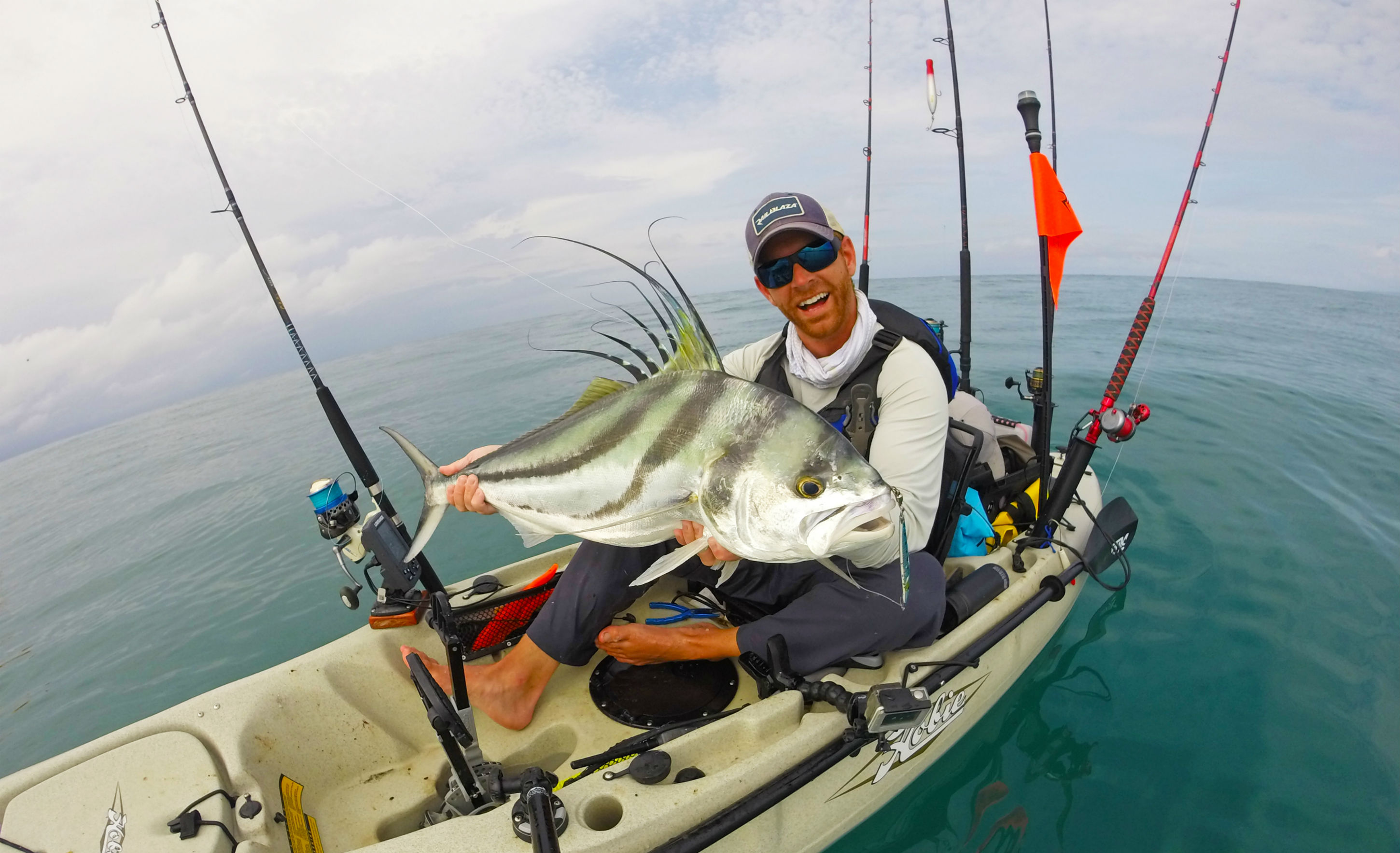 Rooster fish in Panama
