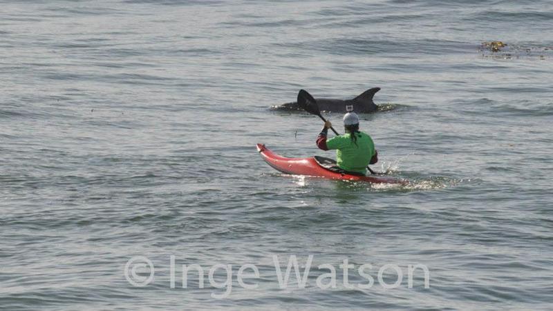dolphinphoto ingewatson