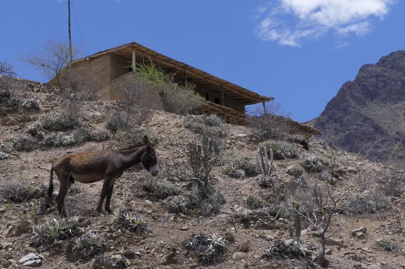 Graham Fitter - Adobe home along side hike