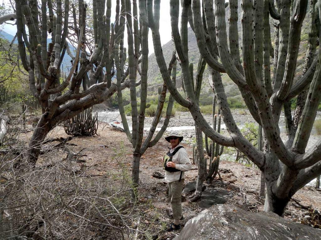 Rocky Contos - Giant Cactus